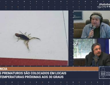 Escorpião em maternidade de São Paulo