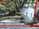 Sem chuva, árvore gigante cai em cima de carro estacionado em rua de SP