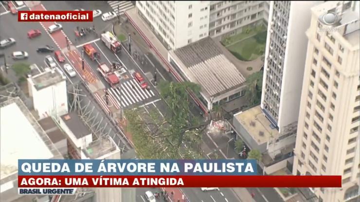 Árvore na Avenida Paulista